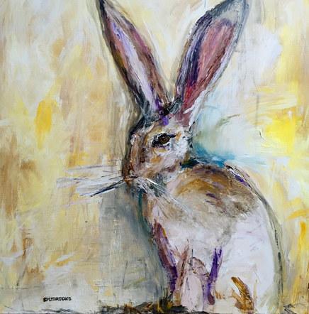 Foolish Belgian Hare