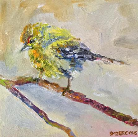 Tiny Pine Warbler