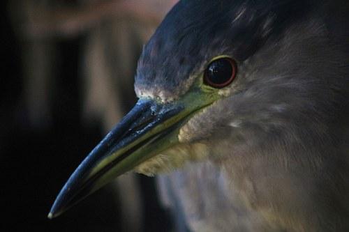 Bird in State Park