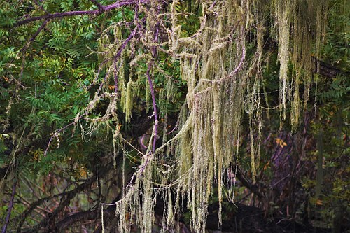 Close-up of Willow Tree