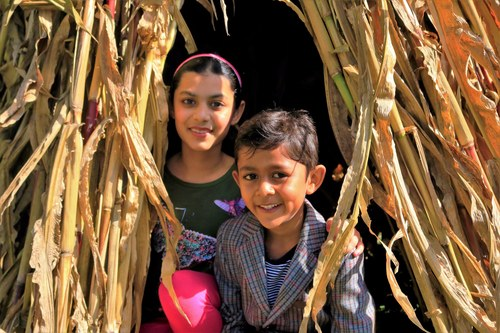 Children Playing in Corn Stalk for Farm Event