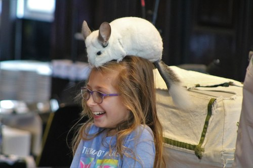 Chinchilla and a Little Girl on Family Day