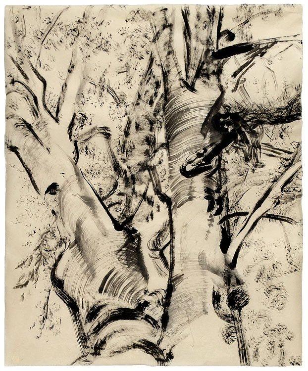 Sintra Tree