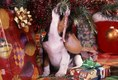 Beagle Puppy playing with candy cane under Christmass Tree