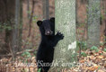 True Hugger, Young black Bear cub.
