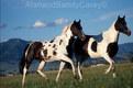 Montana Horses. 2