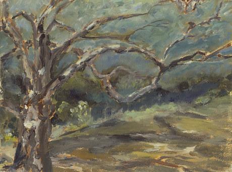 Mission Creek Oak