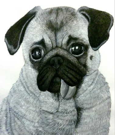 Peter the Pug