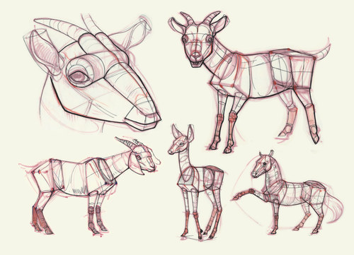 Basic Shapes Ungulates