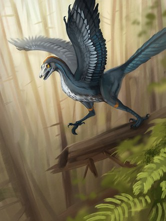 Archaeopteryx Illustration