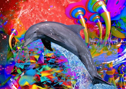 Dolphin Color Splash