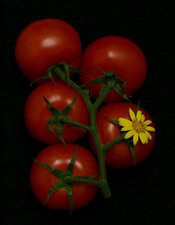 Tomatoes naturre