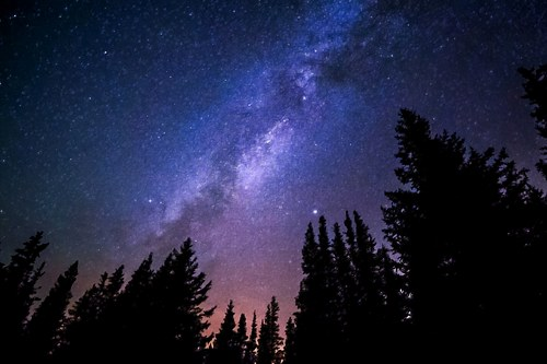 Conifers Reaching to Milky Way