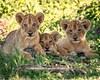 W030: Cuteness overload, Selous game reserve, Tanzania
