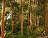L040: Hululu waterfalls, Morogoro, Tanzania